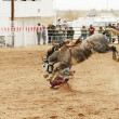 Saddle bronc 2 — Stock Photo