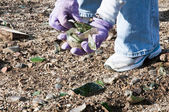 Community park cleanup — Stock Photo