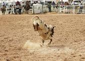 Bucking bull 2 — Stock Photo