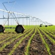 Center pivot irrigation system — Stock Photo