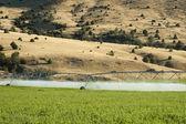 Irrigação de culturas — Foto Stock
