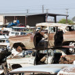Auto Salvage Yard - Stock Photo