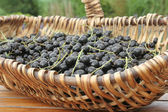 Freshly picked Black currants — Stock Photo