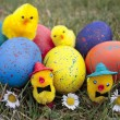 Colored easter eggs and chicks — Stock Photo