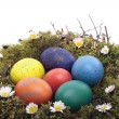 Stock Photo: Colored eggs in bird nest over white