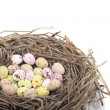 Easter eggs in bird nest over white — Stock Photo
