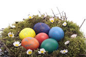 Colored eggs in bird nest over white — Stock Photo