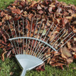Autumn leaves and rake on lawn — Stock fotografie