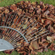 Autumn leaves on grass lawn — Stock Photo