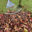 Foto Stock: Autumn leaves and rake on lawn