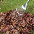 Autumn leaves on grass lawn — Stock Photo #3026149
