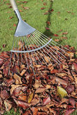 Autumn leaves and rake on lawn — Stock Photo