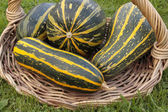 Freshly picked marrows in basket — Stock Photo