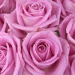 Foto Stock: Bouquet of pink roses over white