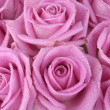 Bouquet of pink roses over white - Stock Photo