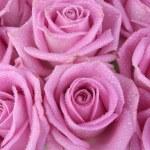 boeket van roze rozen over Wit — Stockfoto