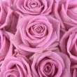 Bouquet of pink roses over white background — Stock Photo #3103519