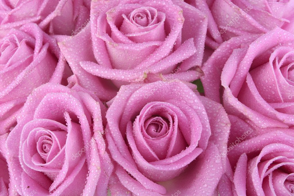Bouquet of pink roses over white background — Photo #3102404