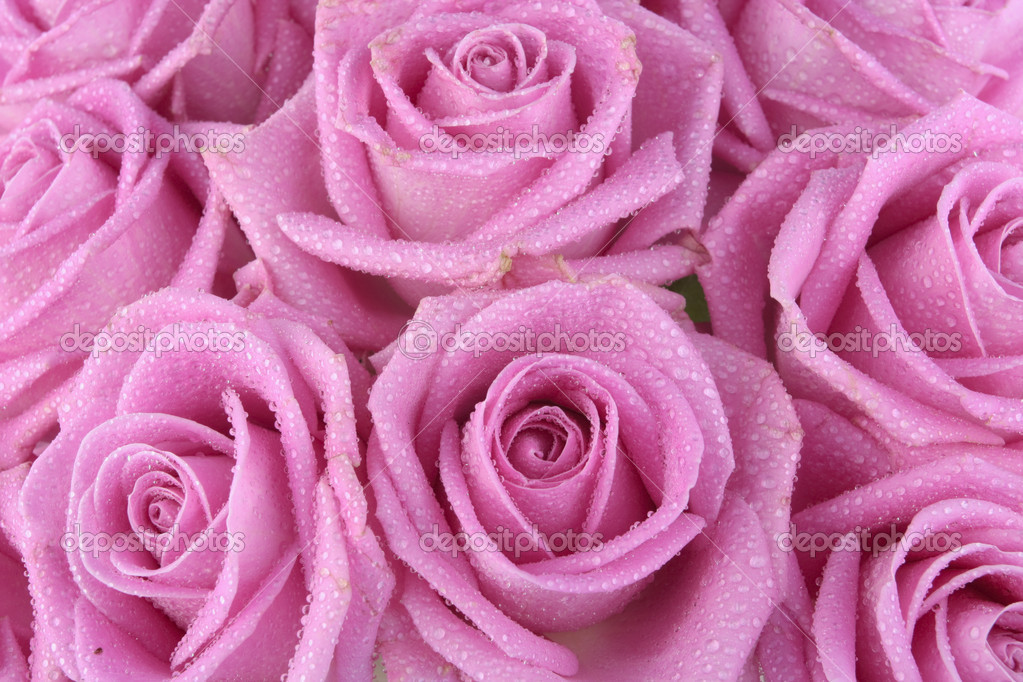 Bouquet of pink roses over white background — 图库照片 #3102404