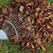 Autumn leaves on grass lawn — Stock Photo #3149964