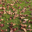 Autumn leaves on lawn — Stock Photo