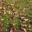 Autumn leaves on lawn — Stock Photo #3150495