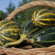 Freshly picked marrows — Stock Photo #3155576