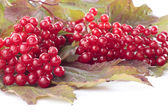 Ripe red berries over white — Stock Photo