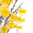 Flowers and willow stems over white - Stock Photo