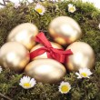 Gold easter eggs in bird nest isolated white - Stock Photo