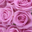 Bouquet of pink roses over white background — ストック写真