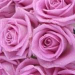 Букет из розовых роз на белом фоне — Стоковое фото