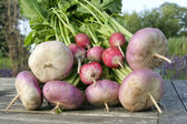 Root vegetables closeup ongarden table — Stock Photo