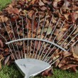 Autumn leafs and rake on grass lawn — 图库照片
