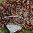 Autumn leafs and rake on grass lawn — Foto Stock