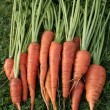 Stock Photo: Freshly picked up carrots on grass