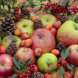 Fresh ripe apple selection in autumn — Stock Photo