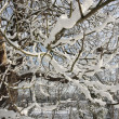 Stock Photo: Winter landscape covered in snow