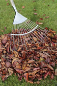 Autumn leaves fallen on grass lawn with rake — Stock Photo