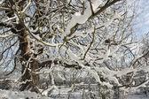 зимний пейзаж покрытые снегом — Стоковое фото