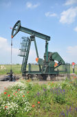 Kacaljka extraction of oil — Stock Photo