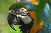 Portrait of ara parrot — Stockfoto