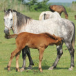 Mare and foal on pasture — Zdjęcie stockowe #3392343