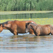 Horse at the river — Stock Photo #3392471