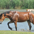 Horse at the river — Stock Photo #3392495