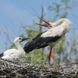 Storks in the nest - Stockfoto