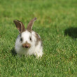 Little bunny grazing — Stock Photo #3448457