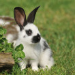 Beautiful little rabbit on the grass — Stock Photo