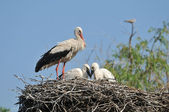 Storks in the nest — Stock Photo