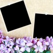 Floral Background with Blank Photos — Foto de stock #3057813